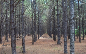 Planting The Seeds Of Environmental Stewardship Enviro